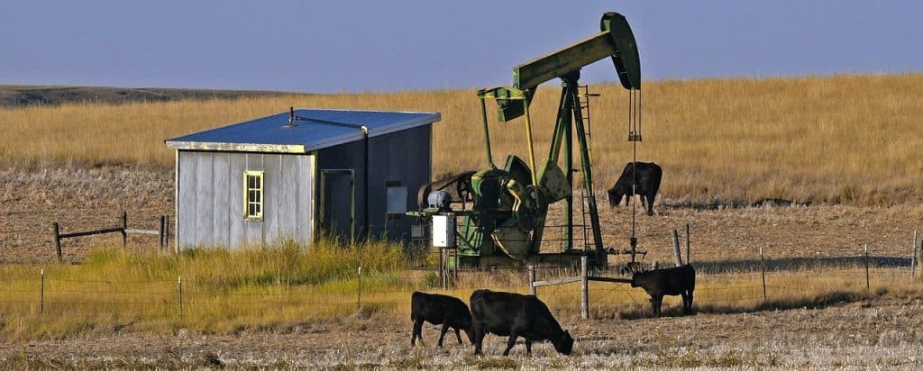 oil rig with cows